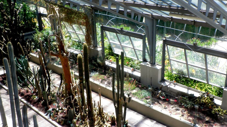 Invernaderos jardín botánico Madrid