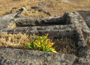 Tumbas excavadas en la roca y flores