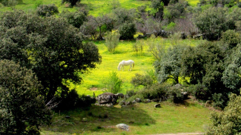 Senda Lagunillas (Chapinería)