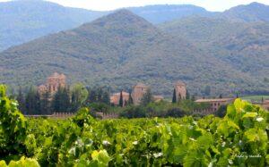 Monasterio del Poblet entre viñedos