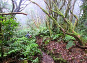 Senderos por el Bosque Encantado de Anaga