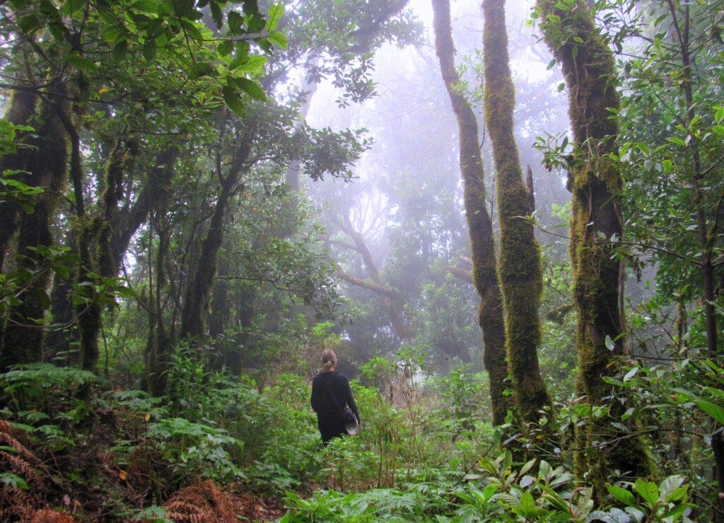 Ruta por el bosque encantado de Anaga