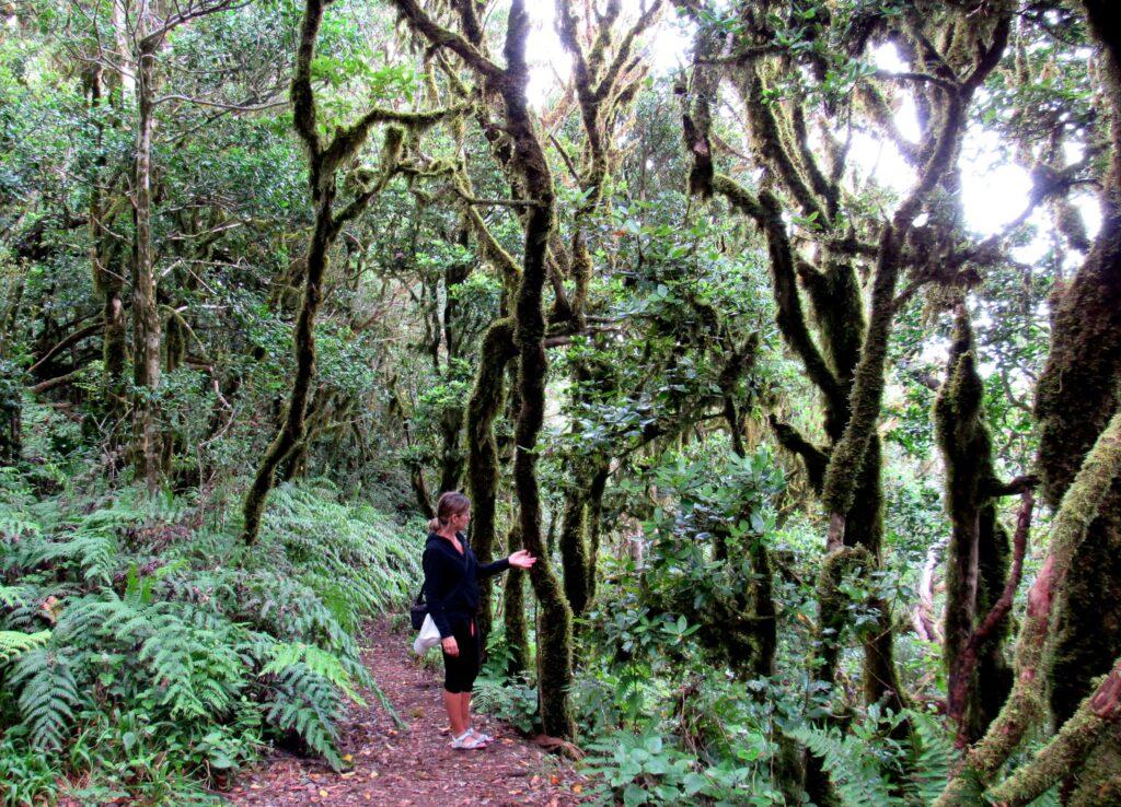 Musgo en el bosque de laurisilva de Anaga