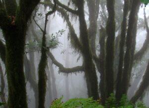 Bosque Encantado de Anaga con niebla