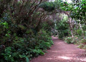 Senda por el bosque de laurisilva