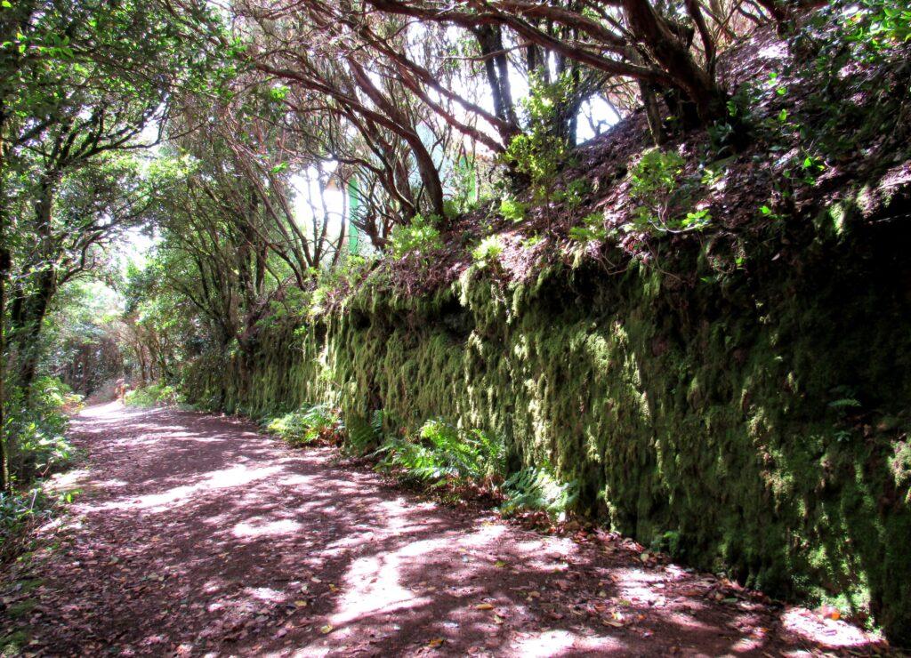 Pared de musgo Ruta de los Enigmas en el Parque Rural de Anaga