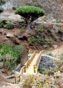 Puente de madera en El Draguillo del Parque Rural de Anaga