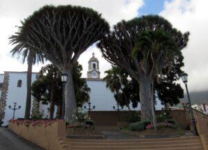 Iglesia de Santiago Apóstol y dragos de los Realejos