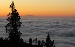 Mares de nubes y pinos en el Teide