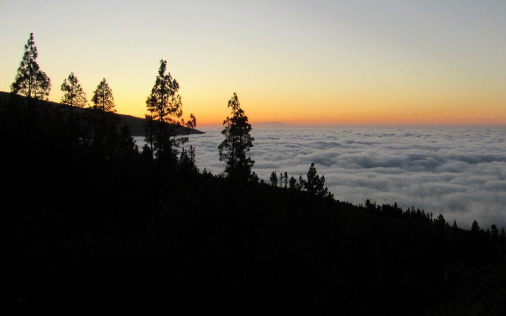 Mares de nubes y pinos en Tenerife