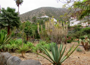 Jardín Botánico de Vallehermoso