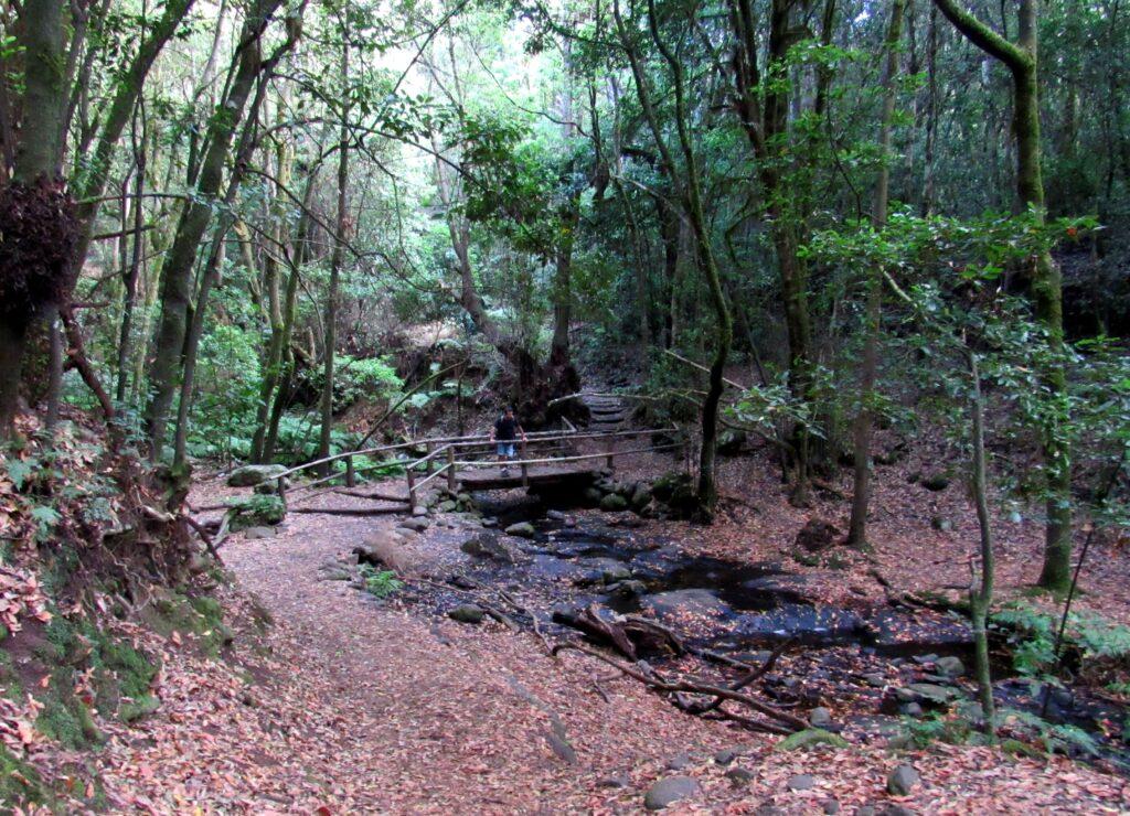 Riachuelo del Cedro en el Parque Nacional de Garajonay