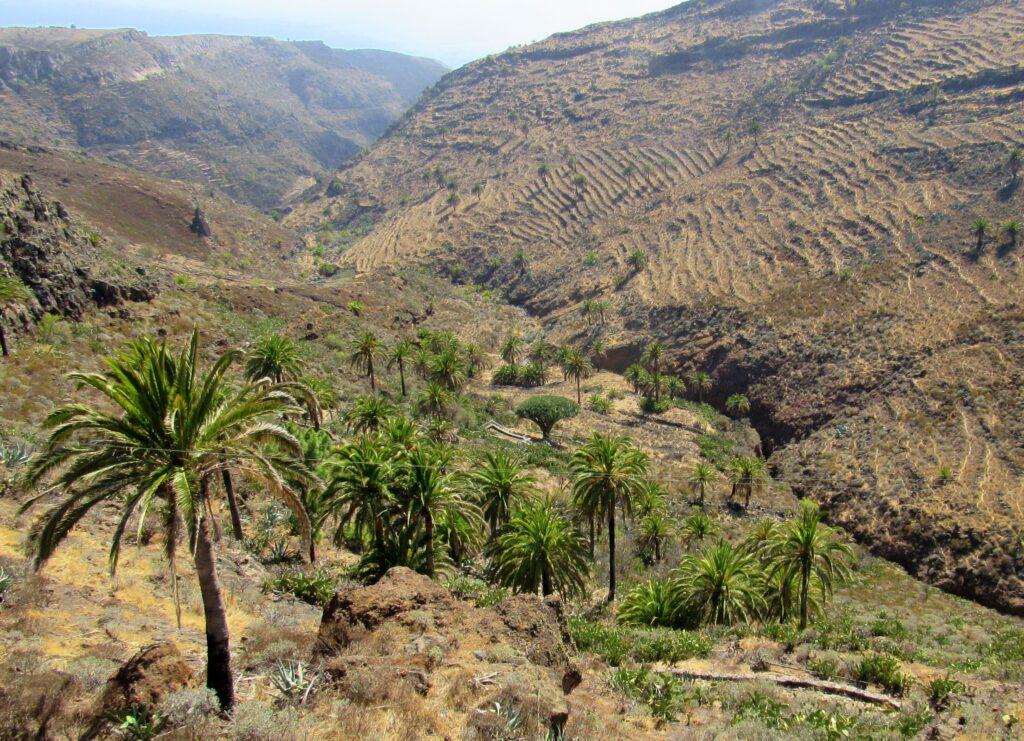 Barranco de Tajonaje en la Gomera
