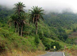 Palmeras y  niebla en La Gomera