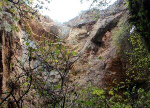 Vegetación en el interior de la Mina de La Jayona