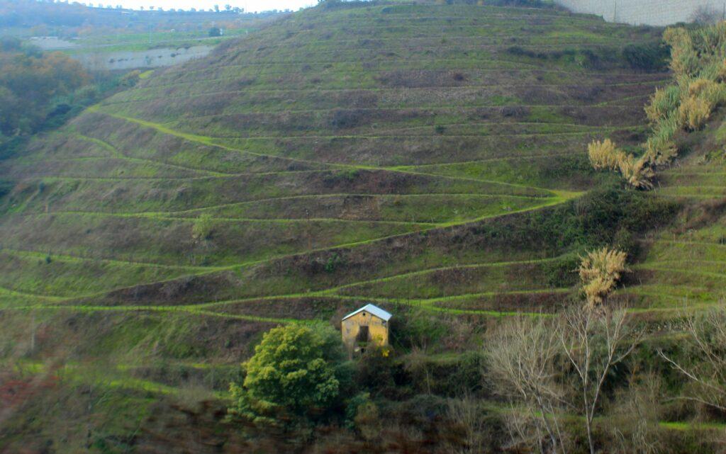 Bancales de viñedos en el Duero