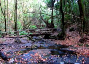 Puente en la ruta la ermita