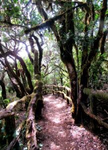 Ruta Cañada de Jorge