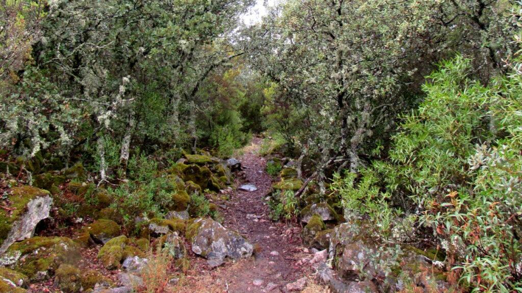 Ruta Plaza de los Moros en Cabañeros