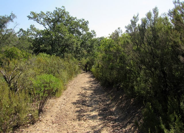 Camino por la senda de la Viñuela en Cabañeros