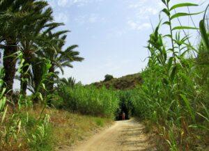 Rambla del cañar en La Azohía