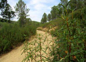 Bosque mediterráneo en la pista forestal de la Garganta de las Lanchas