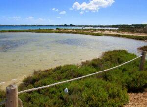 Qué ver en el estany de Peix en Formentera