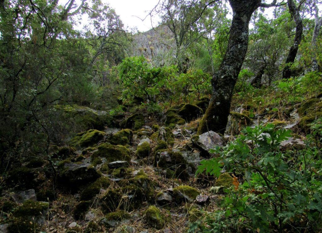 Bosques de la Garganta de las Lanchas