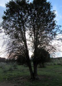Árboles de la cascada del Hervidero