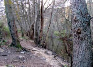 Camino junto al río Guadalix