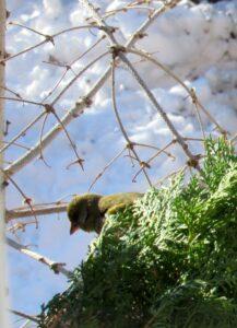 Pájaros en el temporal Filomena