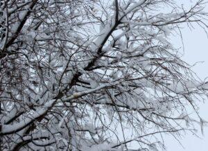 Árboles con nieve