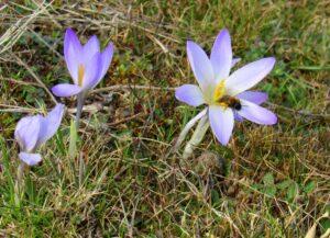 Flores silvestres senda del Hornillo