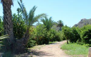 Valle de Ricote cítricos y palmeras