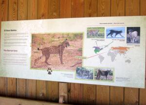 El lince Centro de Visitantes el Acebuche