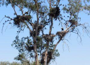 Cigüeñas Dehesa de Abajo