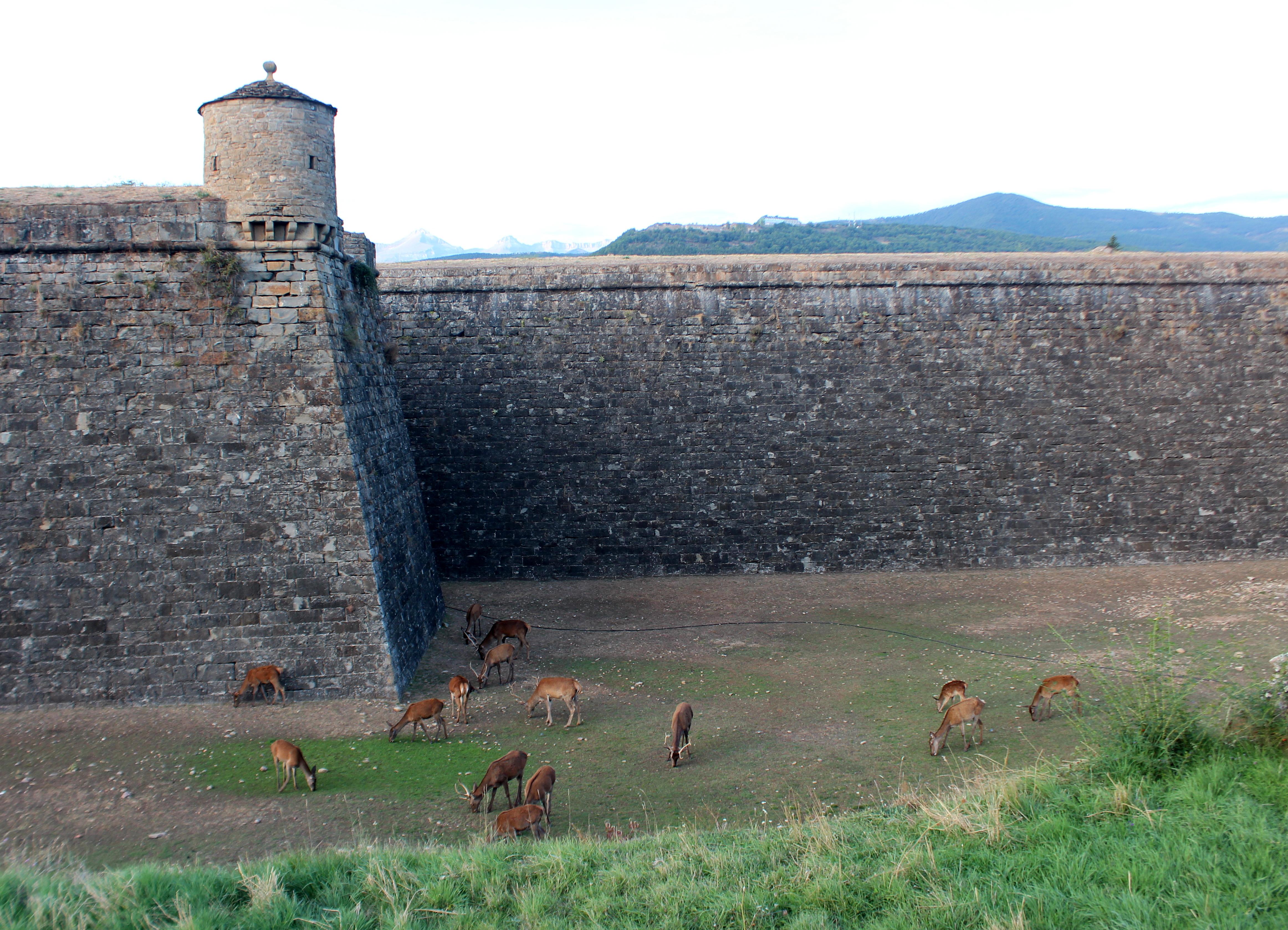 Ciervos en la Ciudadela de Jaca