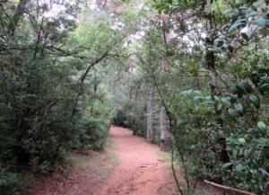 Rutas por San Juan de la Peña