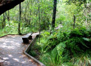 Paseo de madera étang Leon Les Landes