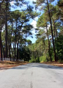 Bosque de pinos en Las Landas